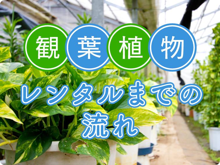 観葉植物レンタルまでの流れ