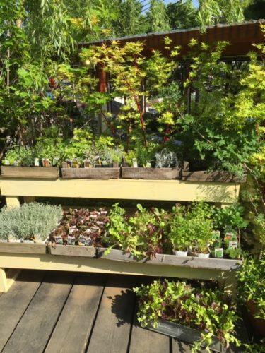 もう枯らさない!!室内用の観葉植物の育成に必要な5つの知識