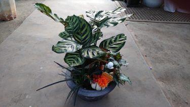 知っとくだけで得をする。植物をつかって遊び心ある雰囲気作り(ハロウィン編)