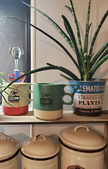 一人暮らしの味方!簡単水やりのおすすめ観葉植物4選
