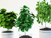 観葉植物レンタルパンフレット
