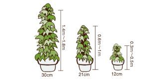 観葉植物レンタルお値段